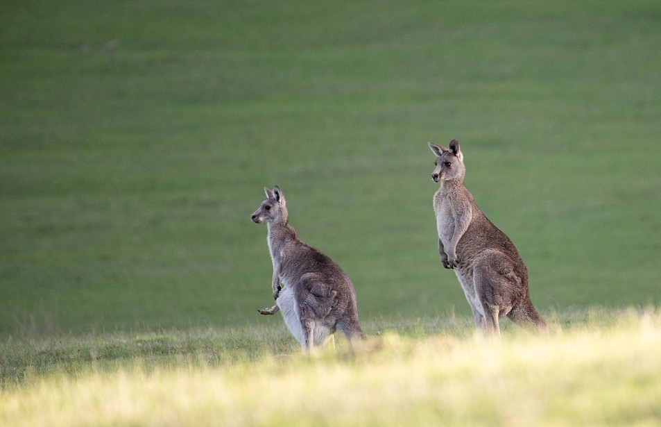 Kangaroo Leather items are famous all over Australia and abroad
