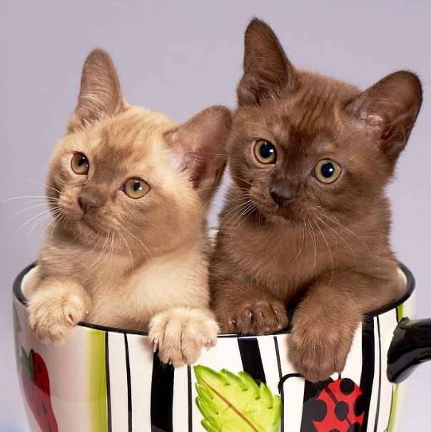 2 cats inside a mug
